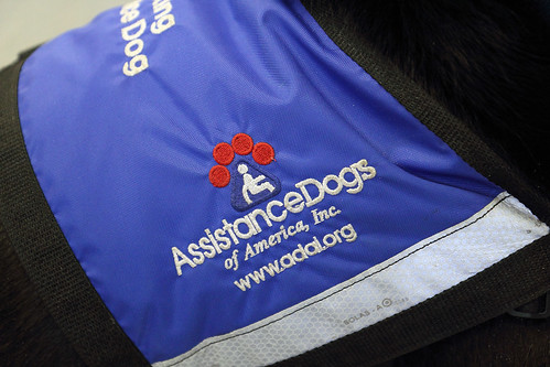 staff and volunteers of the wonderful Assistance Dogs of America, Inc.