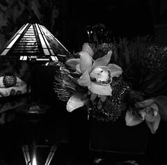Valentine's Day (Rodney A. Johnson) Tags: flowers stilllife zeiss 50mm d76 hasselblad scala agfa distagon 500x500 agfascala200x flexbody