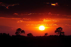 Great African Sunrise (Wild Dogger) Tags: africa travel tree nature sunrise canon wildlife urlaub natur adventure safari afrika botswana sonnenaufgang baum 2010 abenteuer linyanti kwando canoneos40d lebala fotocompetition fotocompetitionbronze thomasretterath canonef70200mmlis28usm blinkagain canonef70200mmlis28us musictomyeyeslevel1