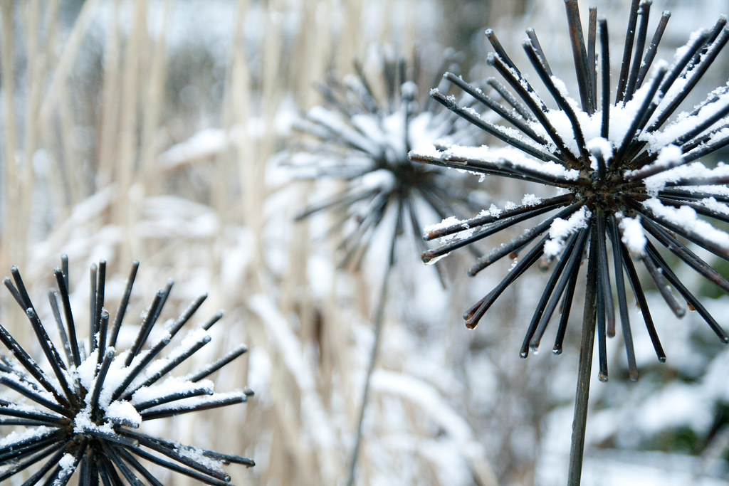 Snow On Metal Allium