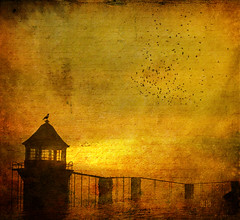 LighThouse (~Alia~) Tags: light bird texture birds night lights sl ciel secondlife textured oiseaux alia theblackbirds slwindlight qunhua aniatatarynowicz