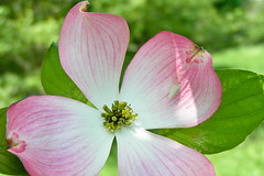 stritz-5042355.jpg (jstritz) Tags: flowers fhsp