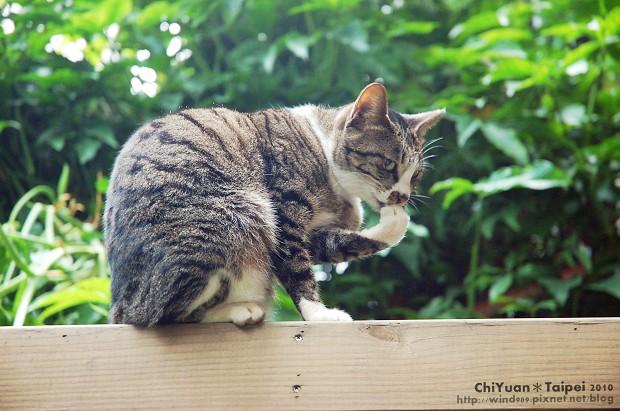 Cat。貓薄荷。竊笑01.jpg
