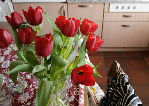 kitchen tulips