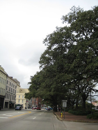 Trees Hanging over the Street