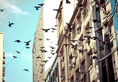 The birds - Gli uccelli - Los pjaros (rackyross) Tags: city cidade urban argentina birds buenosaires pigeons ciudad aves uccelli pajaros urbano palomas ville citt piccioni pichones     thechallengefactory