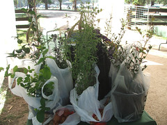An eclectic haul - plants we bought at Bolobek. Photo by me, CC-licensed