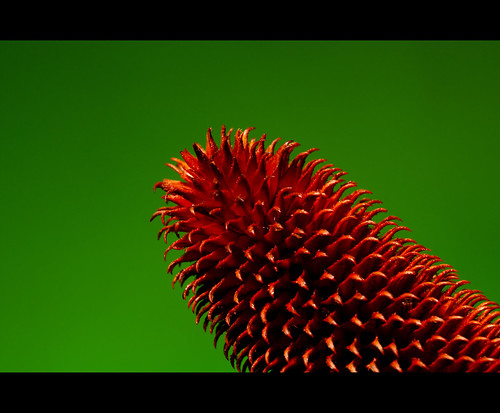 Day 058/365 : Red Durian by djokosantoso