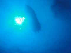 ハワイ島ブルーウォーターダイビング