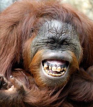 orango-felice