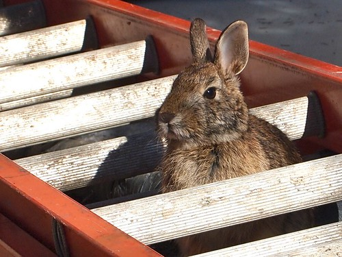 rabbit in the ladder