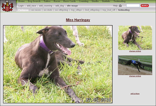 Greyhound: Miss-Harringay