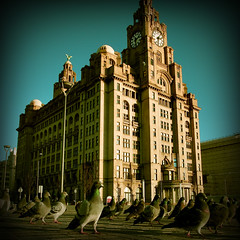 sunday stroll (fotobananas) Tags: liverpool pen pigeons sunday saturday olympus stroll pierhead cliche ep1 liverbirds liverbuilding hcs fotobananas