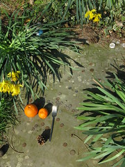 Ludwig Wittgenstein's grave (shaggy359) Tags: cambridge orange freeassociation grave leaves coin candles coins fork daffodil oranges pinecone ludwig daffodils 1951 wittgenstein philospher ludwigwittgenstein cambidgeshire ascensionparishburialground ascensionburialground camns