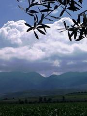 Milli Triffa   (Jamal Elkhalladi) Tags: nature morocco maroc agriculture milli beni  hassi    berkane   triffa  znassen