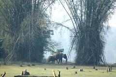 mom & baby elephants Nagarhole national park (LaylaLee) Tags: park india national gandhi karnataka rajiv