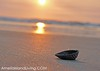 The Seashell At Sunrise on Amelia Island, Florida
