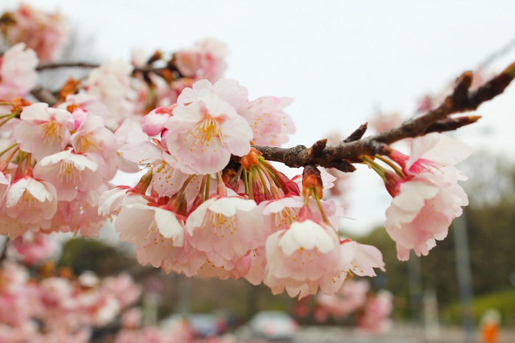 Spring has come (3)