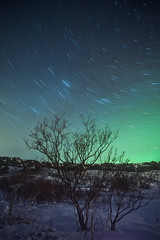StarTrail & Northern lights (Arnar Bergur) Tags: trees winter sky snow cold tree green grass night canon stars lights star iceland trail aurora 5d nightsky northern arnar thingvellir ingvellir 1740 northernlights borealis phenomenon startrail visipix