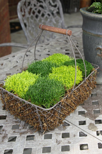 checkerboard moss in basket