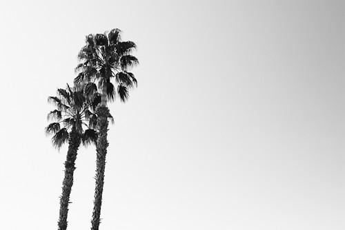 110329 palm springs 003