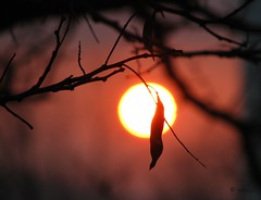 Dreams have as much influence as actions (ewka2205) Tags: sunset tree leaf branch li drzewo zachdsoca ewka2205