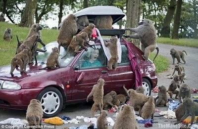 animals_attacking_cars_17