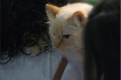 DSC_0188 (Francesco_Fontana) Tags: cat kat chat gato katze mace  macska gatto  con kot gat koka kedi kass katt kissa kttur maka kucing pusa mo   kat     pisic  qattus   kais