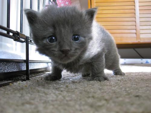 sad kitten?