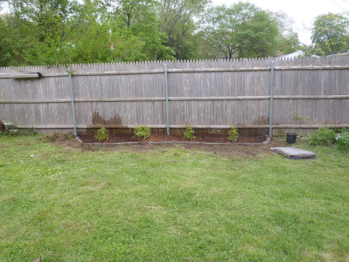 new blueberry garden