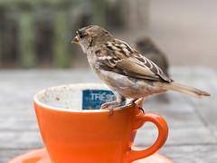 Cheeky Chirpy Chappy (Kevin James Bezant) Tags: islesofscilly ios abbeygardens tresco robin