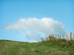 fly away (DigitalLyte) Tags: hill bird clouds path fenceline hamburytout westlulworth dorset uk england