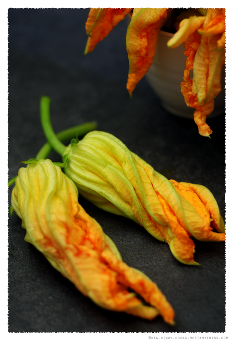 male zucchini flowers© by Haalo