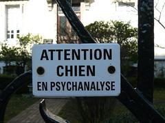 Dax (Landes): le chien était si bizarre qu'il a décidé de faire une psychanalyse! (Marie-Hélène Cingal) Tags: dog chien france southwest perro 40 dax landes sudouest aquitaine dacs akize acqs