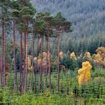 Highland-Autumn-2
