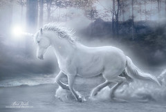 Wild Magic (AdaraRosalie) Tags: horse children landscape magic fantasy unicorn legend myth adararosalie jayderosalie