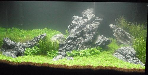 ... Aquarienlandschaften mit unseren Mini Landschaft Steinen