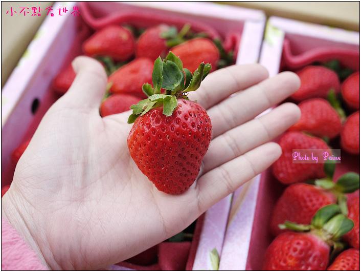 甜柿先生-草莓 (9).JPG