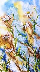Daisies (CKWard42) Tags: flowers daisies painting watercolour