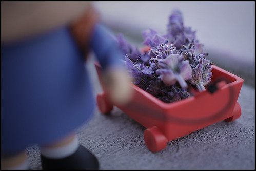 Wagon Full of Lavender.