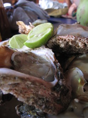 Fresh Oysters - Puerto Escondido, Oaxaca, Mexico
