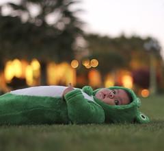 iCan Frog II (ZiZLoSs) Tags: canon eos al ii f18 ef50mmf18ii aziz faisal abdulaziz  ef50mm 365daysproject zizloss  3aziz canoneos7d almanie abdulazizalmanie alhoati hoati httpzizlosscom