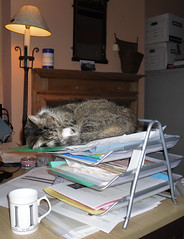 Office Cat (Trev & Bron) Tags: cat work office sleeeping