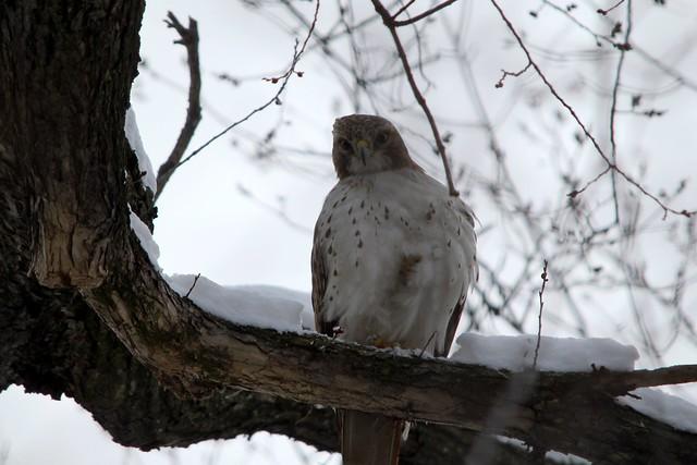 Owl-y