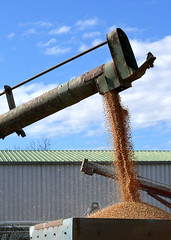 Corn Cascade.... (missnoma) Tags: corn grain cereal australia feed hay cascade auger mungadal droughttime