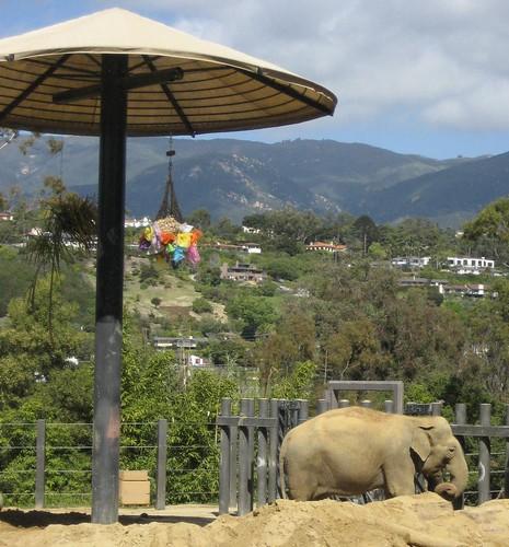 Santa Barbara Elephant 3