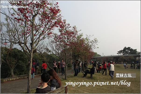 雲林古坑_20110227_I6554