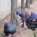 Scuole elementari febbraio 2011 101