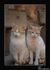 Petra - Come fai a dormire con questo caos (celestino2011) Tags: gatti