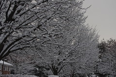 Hello Snow (JordynsAzombie) Tags: snowybranches